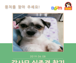 강아지실종,  지난 6월 9일(일)에 경기도 부천시에서 실종된 뭉치를 찾아라!