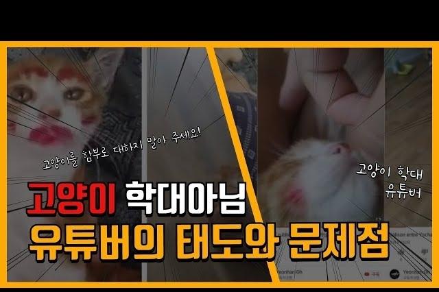 고양이에게 화장하는 것이 학대인 줄 모르는 동물학대 유튜버가 늘고 있다!