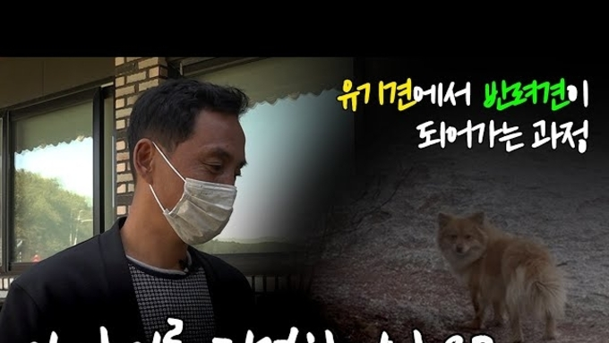 """야생 유기견! 불암산 정상을 떠돌던 누렁이 """"반려견 되다!"""" 유튜브 이찬종TV """"대공개"""""""