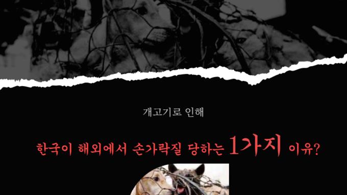 개고기로 인해 한국이 해외에서 손가락질 당하는 1가지 이유?